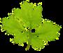 Logo tuincentrum Bekamp's Hoveniersbedrijf